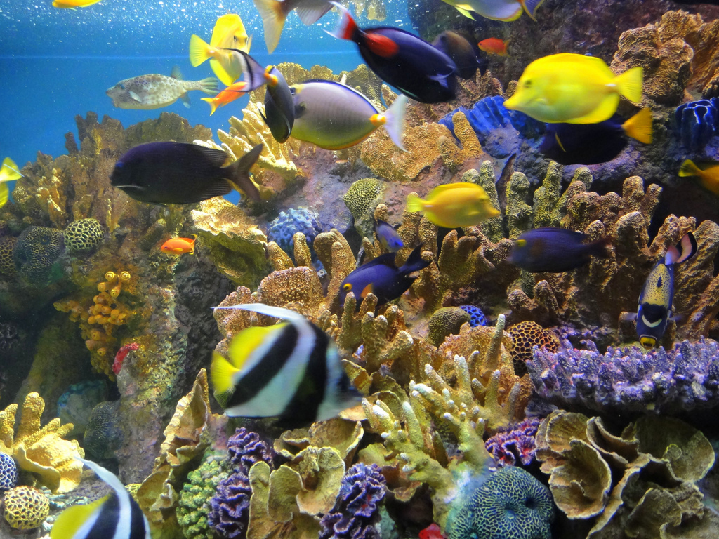 More plastic in the ocean than fish by 2050 greenstar for More fish in the sea